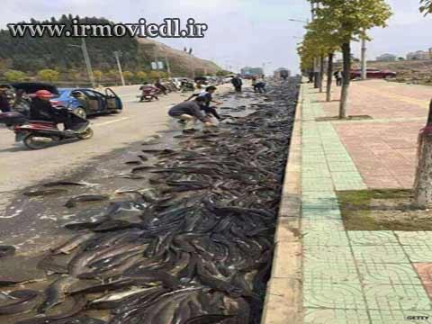 رگبار ماهی از آسمان تایلند